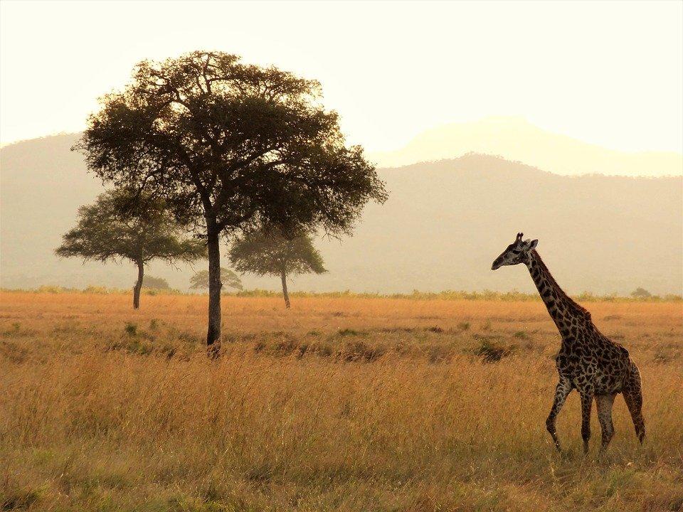Африка больше всего пострадает от изменений климата – ученые