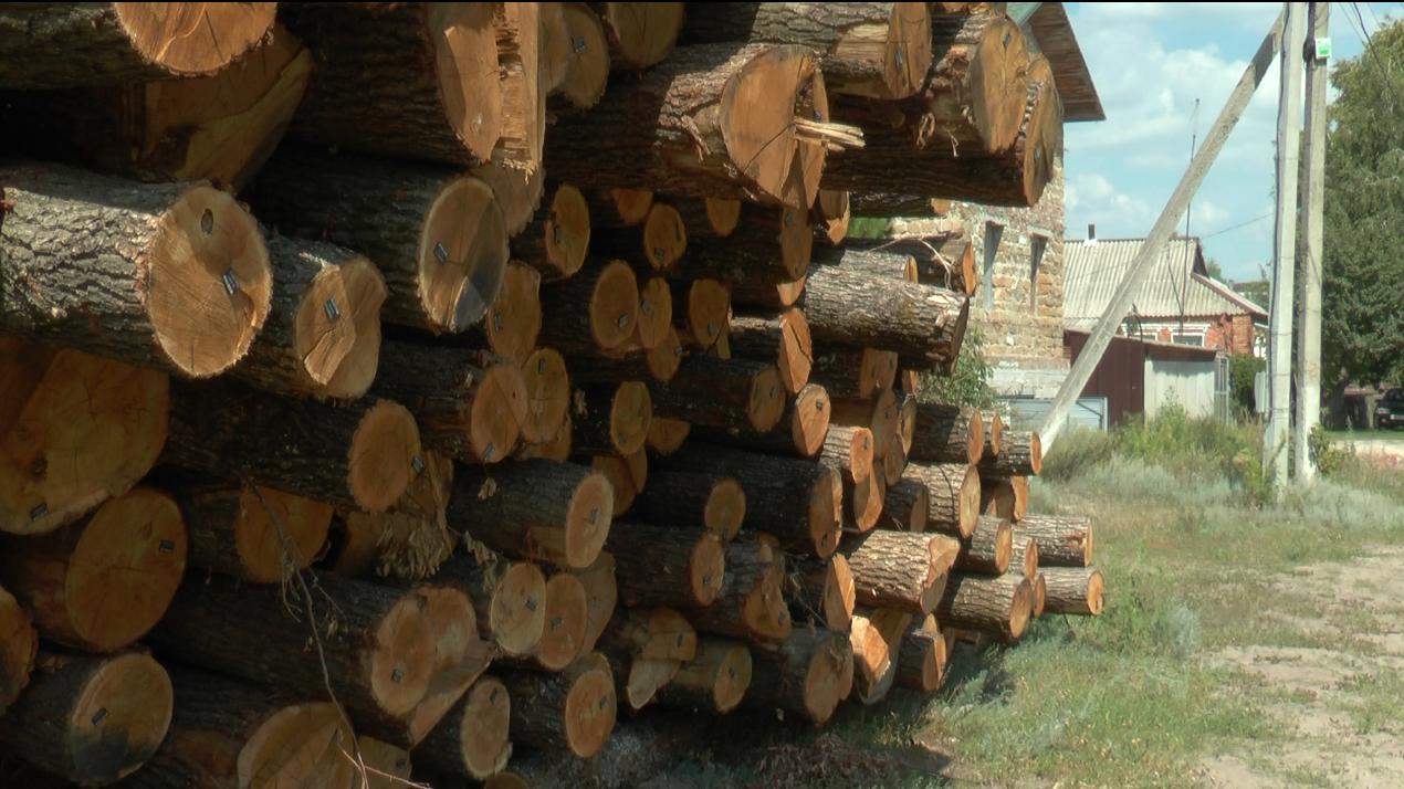 На Харківщині знайшли близько 200 зрубаних дубів (відео)