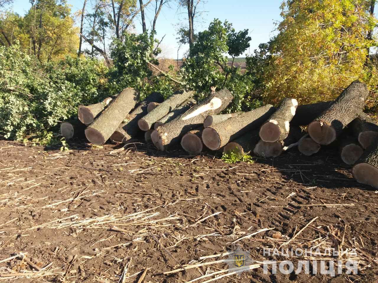 Незаконная вырубка деревьев на Харьковщине: полиция разбирается (фото)