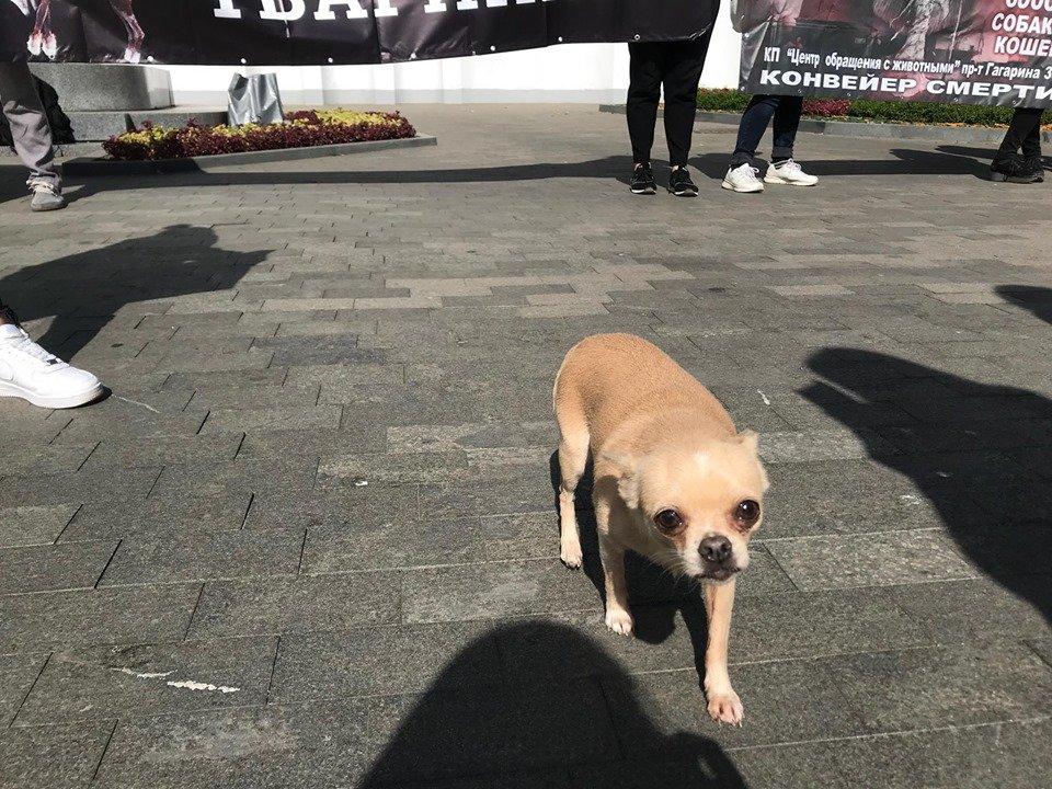 В Харькове проходит марш в защиту животных (фоторепортаж)
