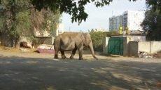 В Харькове во дворе дома гуляет слон (фото, видео)