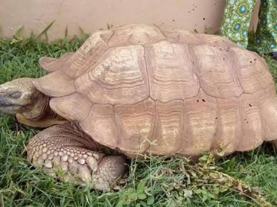В возрасте 344 лет умерла самая старая черепаха мира (фото)