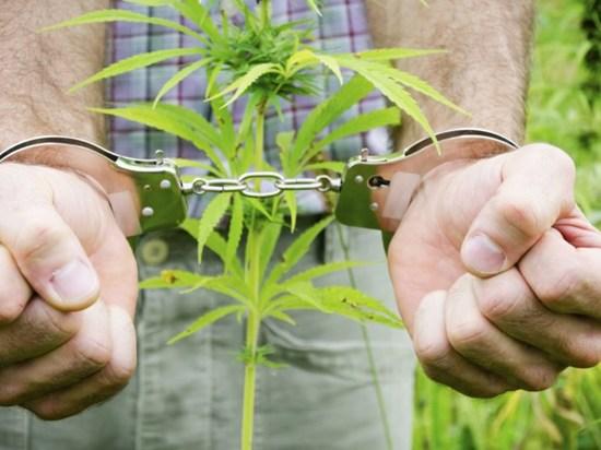 Хранение и продажа марихуаны через сколько выйдет марихуана из организма