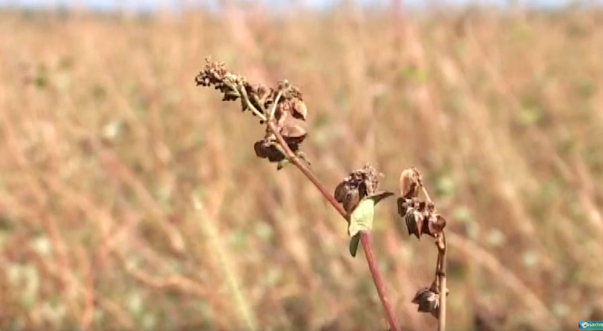 На Харківщині закінчується збір врожаю: у ХОДА розповіли, що буде з цінами (відео)