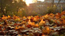 Аномально тепла осінь б'є в Харкові рекорди 50-літньої давності (відео)