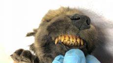 Найдены останки самой старой собаки возрастом 18 тысяч лет (фото)