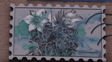 У Харкові з'явились таблички-марки з рідкісними птахами та рослинами (відео)