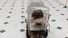 Пацюків навчили керувати авто