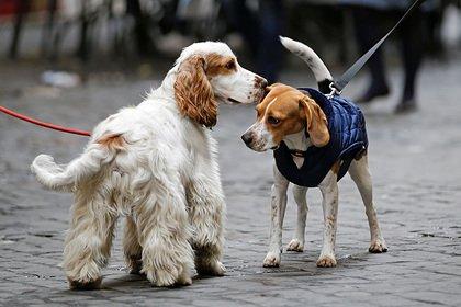 В Италии животные смогут свободно ходить с хозяевами в церковь, ездить в метро и получать пенсию