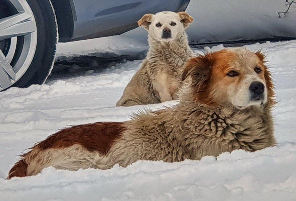 Харьков завалило снегом (фоторепортаж)