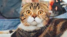 У кошек очень сильно развита мимика, мы просто плохо ее считываем, – ученые