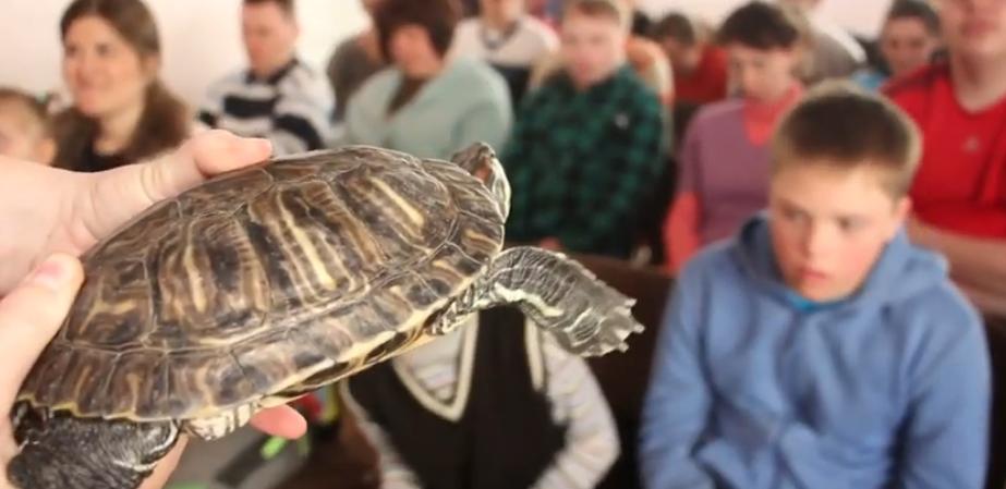 Вихованці Харківського зоопарку підтримали дітей з обмеженими можливостями (відео)