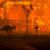 Полмиллиарда животных погибли в бушующих пожарах в Австралии (фото)