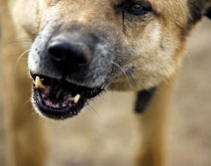 Зграя бродячих собак напала на чоловіка з трирічною дитиною на Харківщині