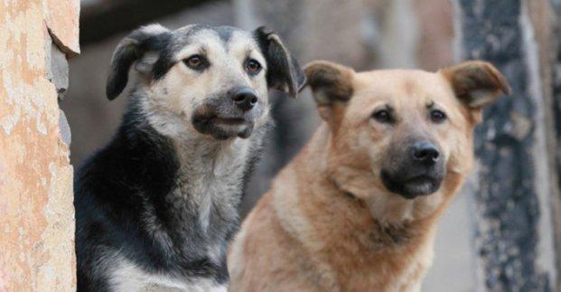 В Центре обращения с животными опровергли информацию об отравлении собак на ХТЗ