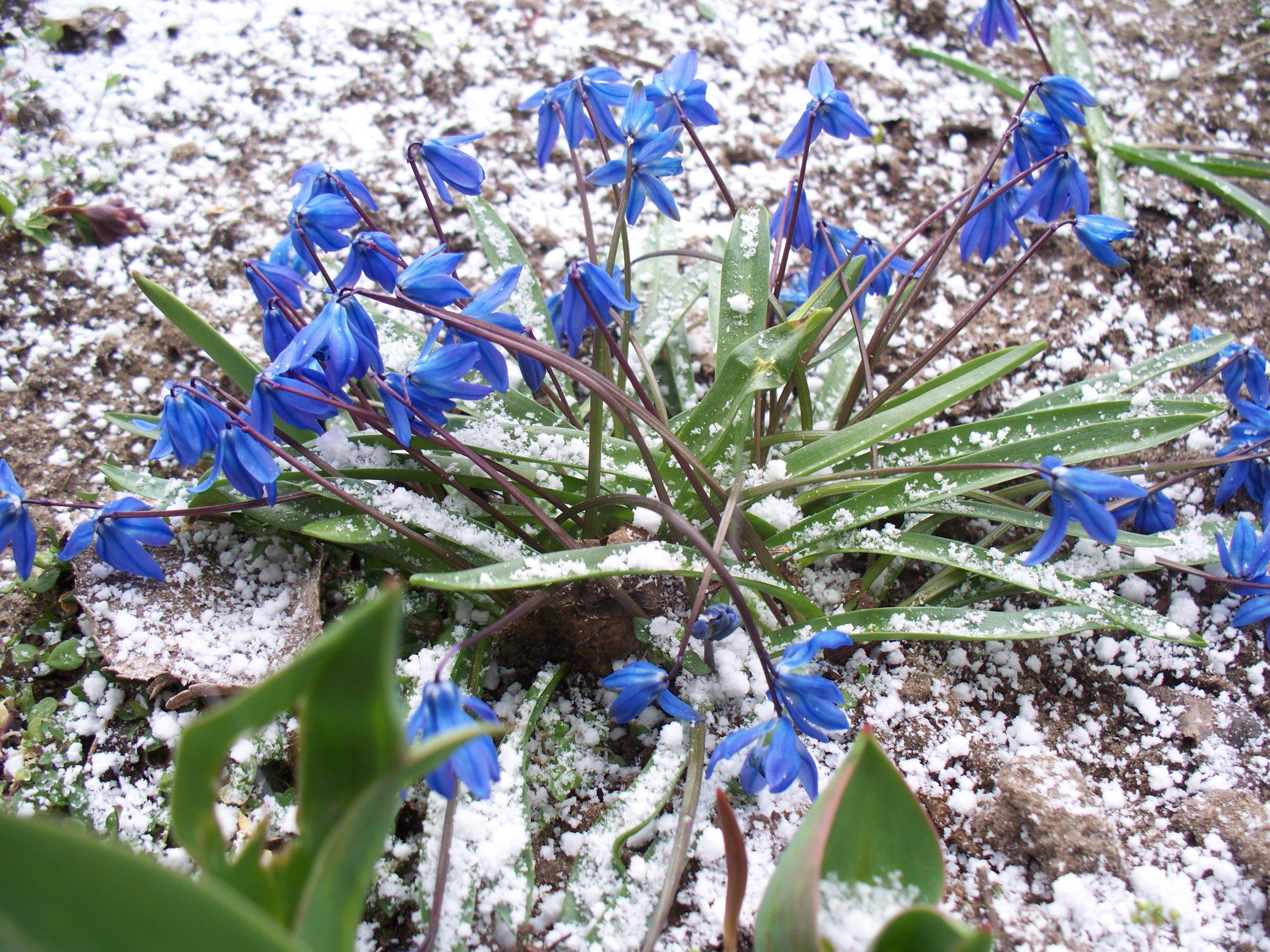На Харківщині випав сніг (фото)