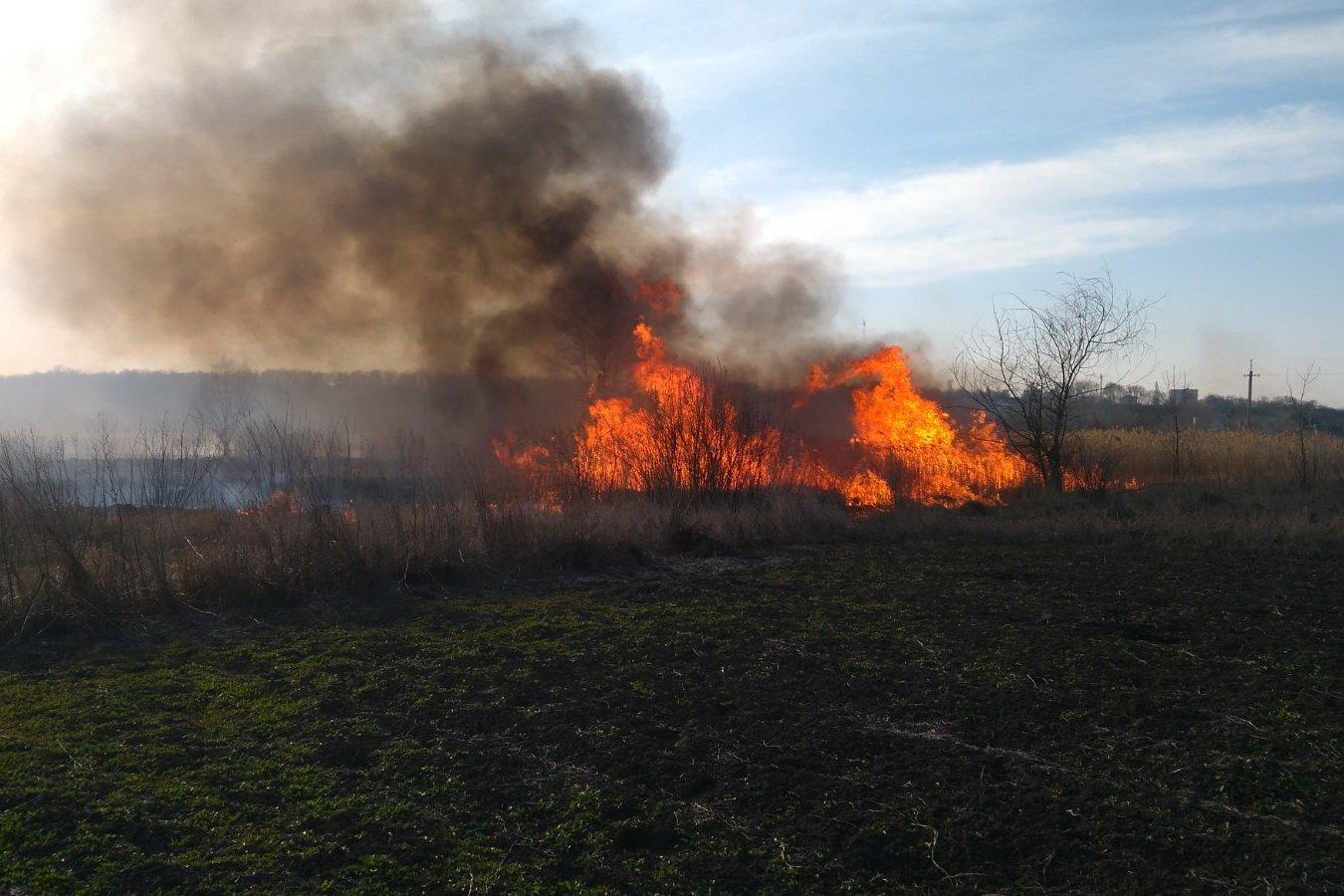 На Харьковщине люди подожгли 90 гектаров полей за сутки. Есть пострадавшие (фото, видео)