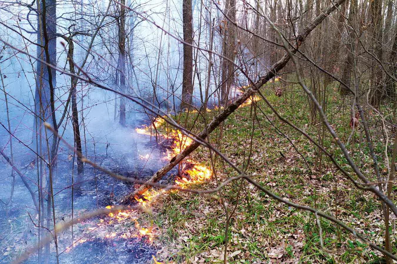 Як збільшились штрафи за підпали екосистем