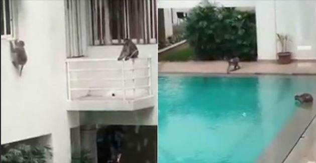Як розважаються мавпочки (відео)
