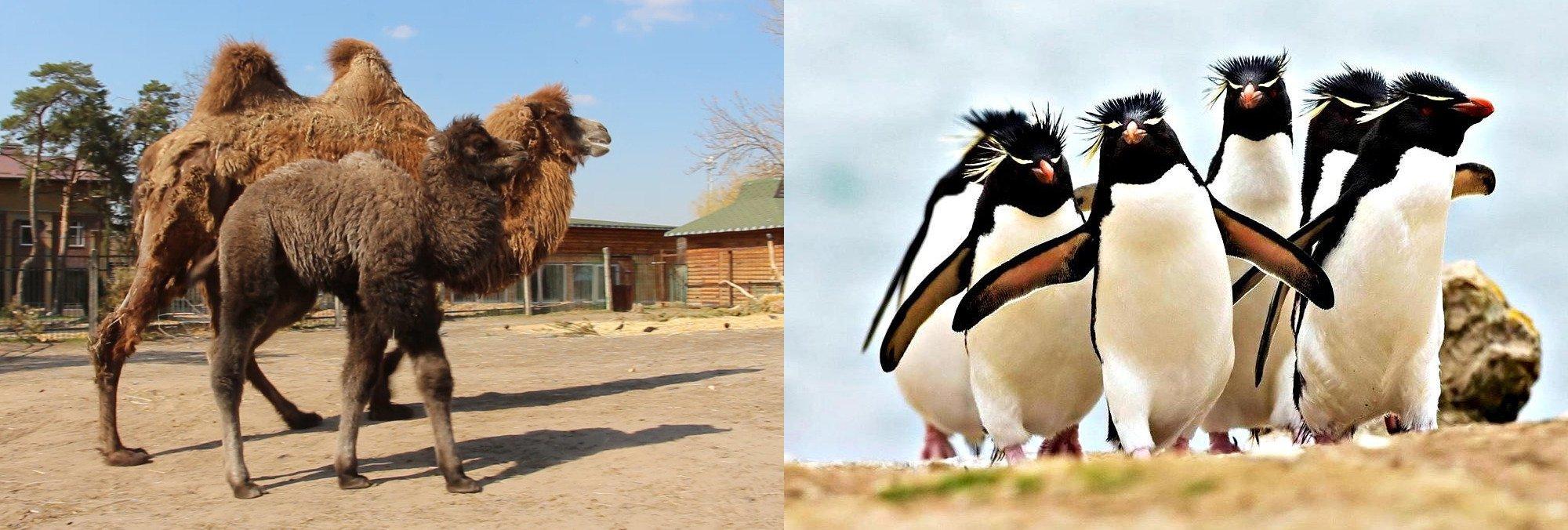 """Скільки коштують""""африканське сафарі"""" та вольєри для пінгвінів?"""