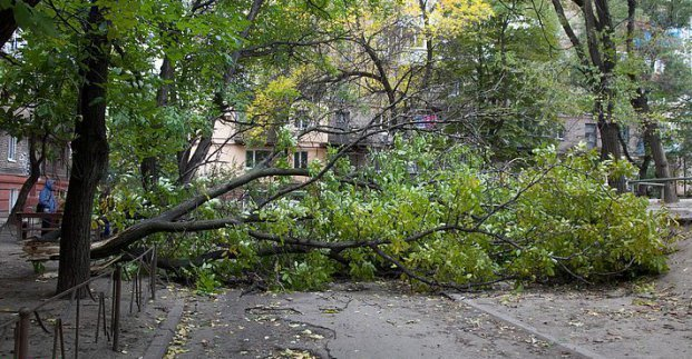 Ночью в Харькове из-за сильного ветра упали 12 деревьев