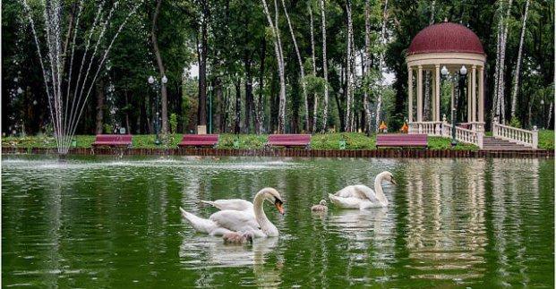 На озеро в центре Харькова после зимовки вернулись лебеди (фото)