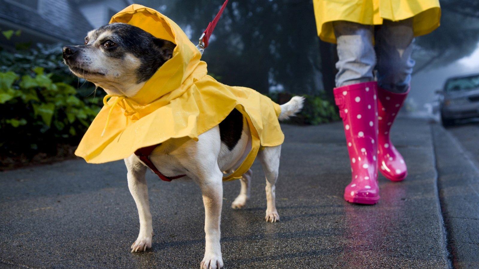 Неделя в Харькове начнется дождями – синоптики