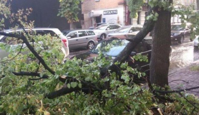 Движение троллейбусов было остановлено на Павловом Поле из-за упавшего дерева