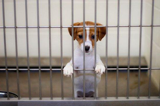 В Харькове снова будут делать дни открытых дверей в приюте для животных