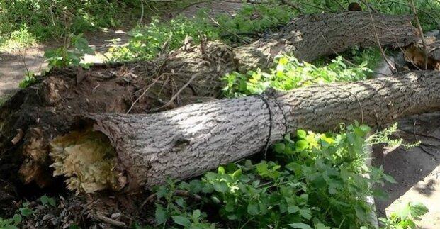 В Харькове ночью ветром повалило 19 деревьев