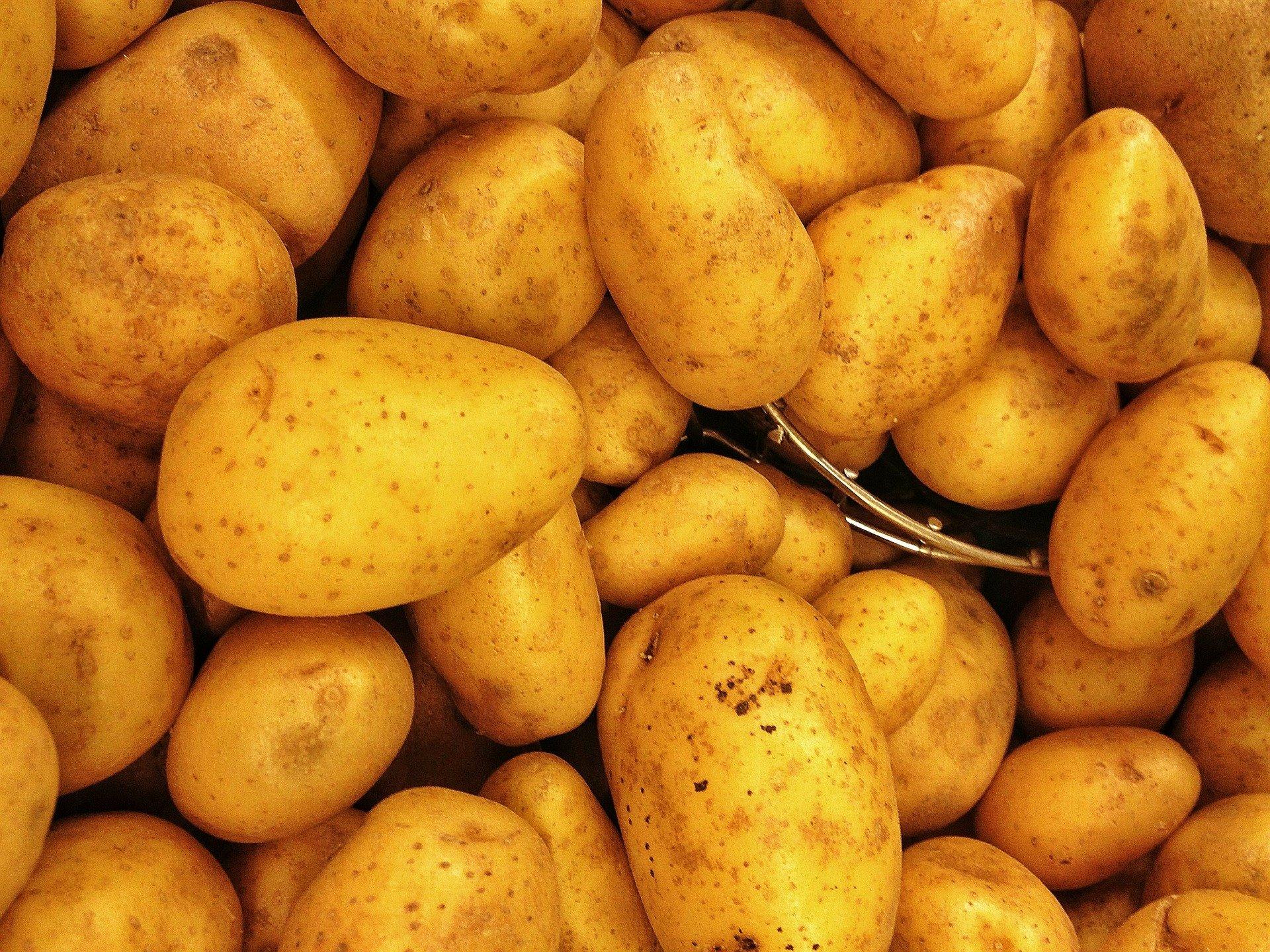 Картошка продолжит дешеветь