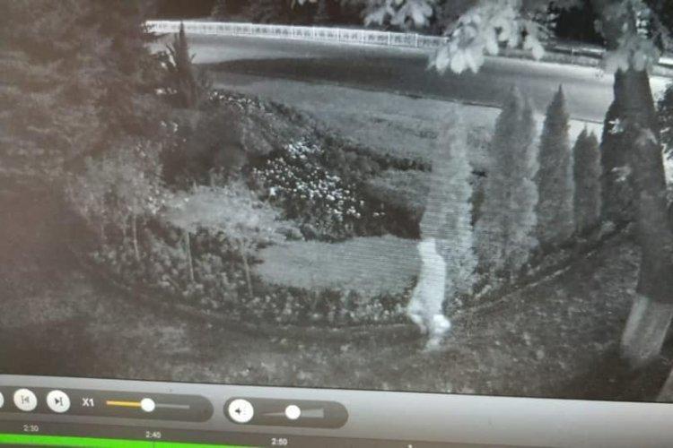 Неизвестный поджег дерево возле мэрии в городе Лозовая (фото)