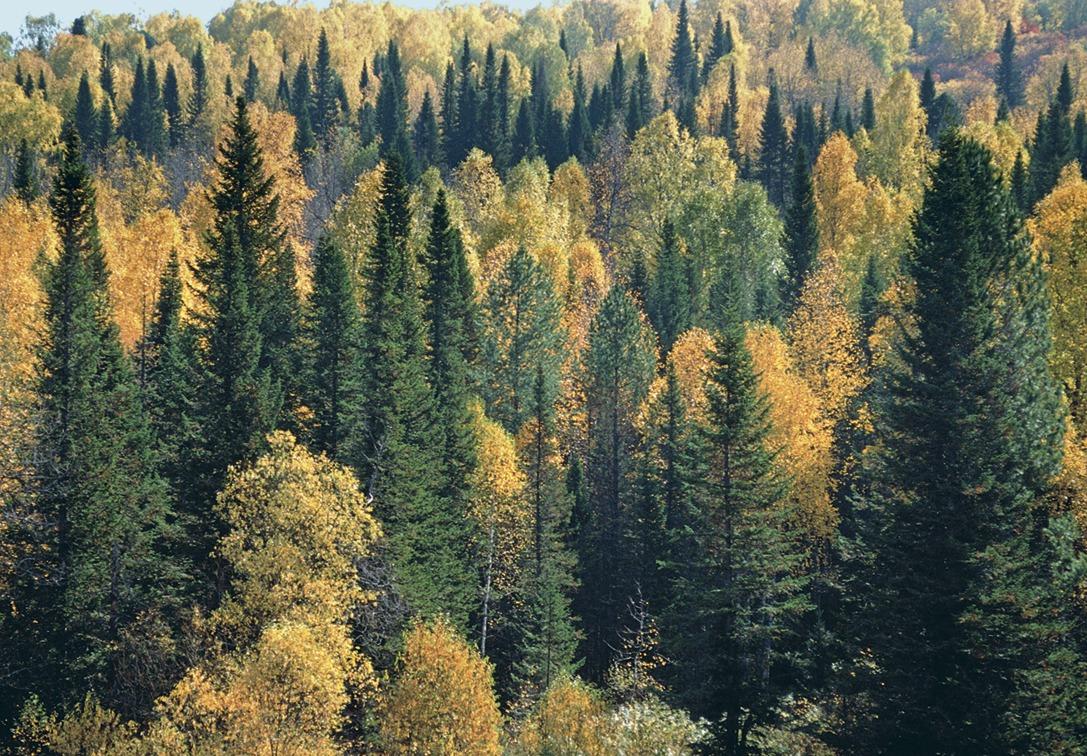 На Харківщині в незаконних рубках підозрюють майже сотню лісничих (відео)