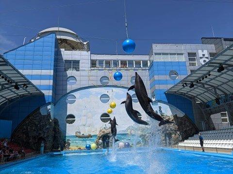 В Харькове детей погибших бойцов покатали дельфины (фото)
