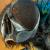 В Австралии ученые назвали новые виды мух в честь героев Marvel