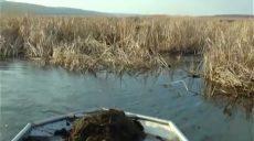 На Харьковщине зафиксирован мор рыбы (фото)