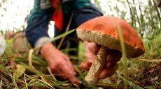 На Харьковщине зафиксирован второй случай отравления грибами в этом сезоне