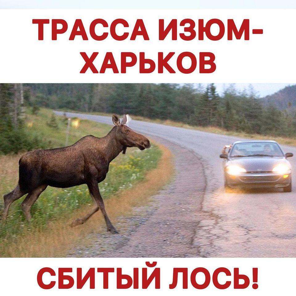 На харьковской трассе сбит лось