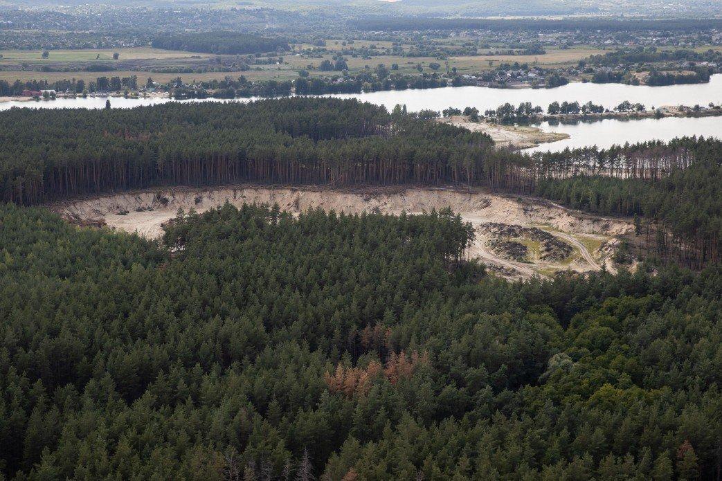 На Харьковщине вырубили 550 дубов и ясеней на общую сумму 7 млн грн