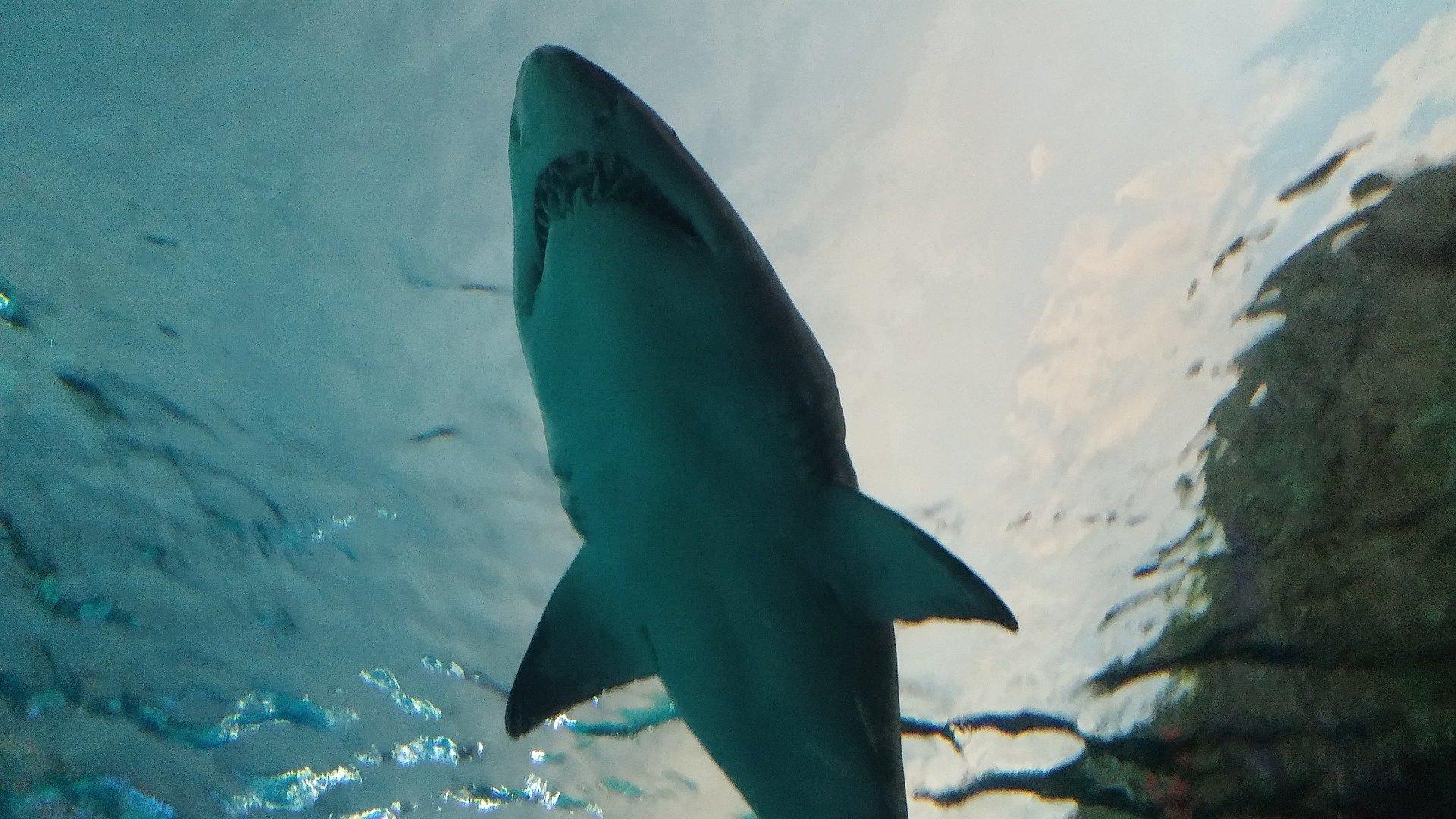 Акула напала на семью украинских туристов в Египте