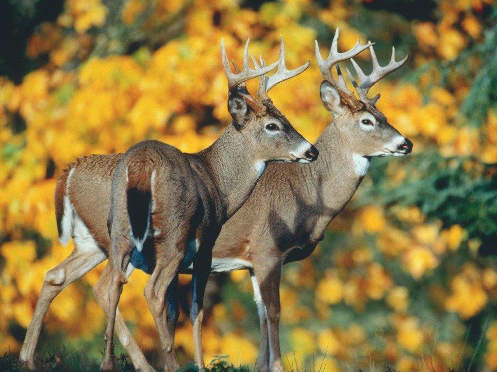 Японець розробив їстівні пакети, аби захистити оленів