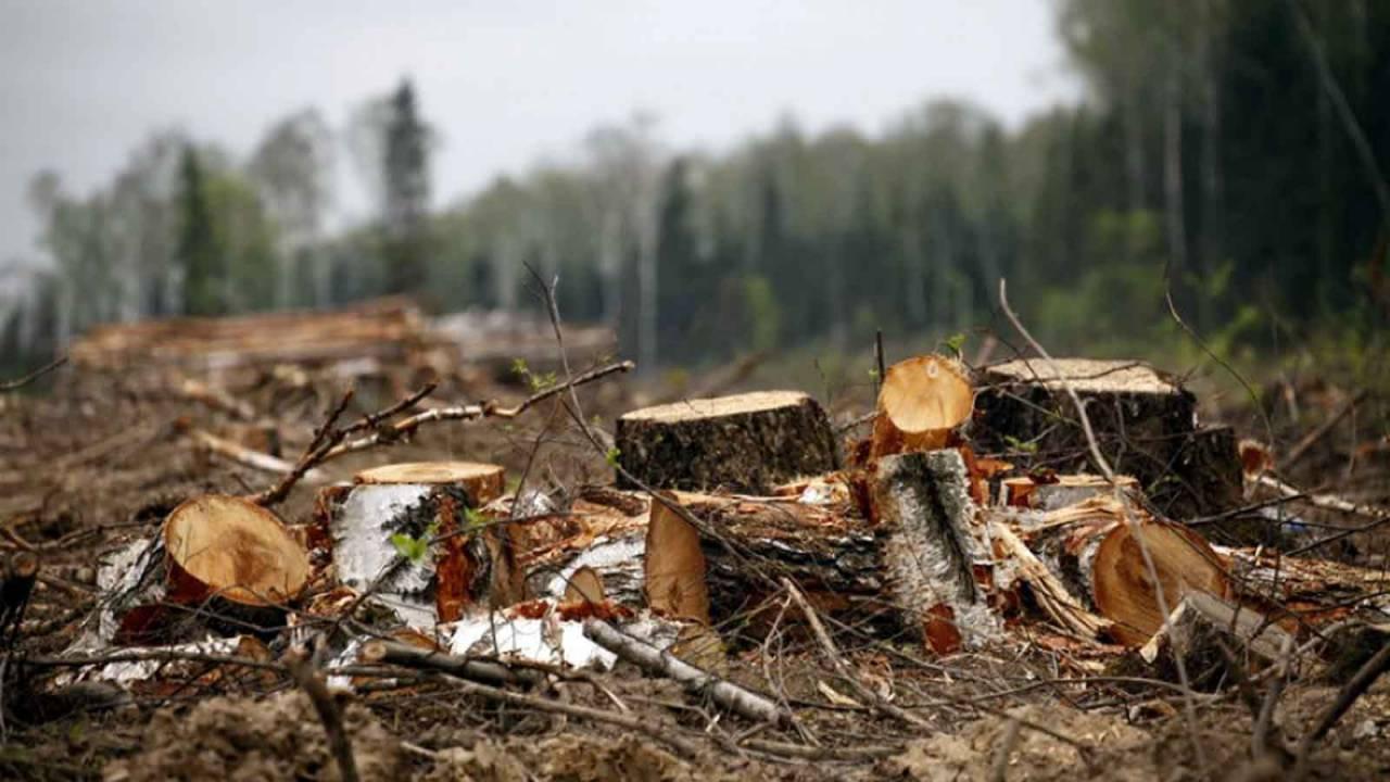 4 мастера леса на Харьковщине нанесли урон государству в размере 7 млн грн. — прокуратура