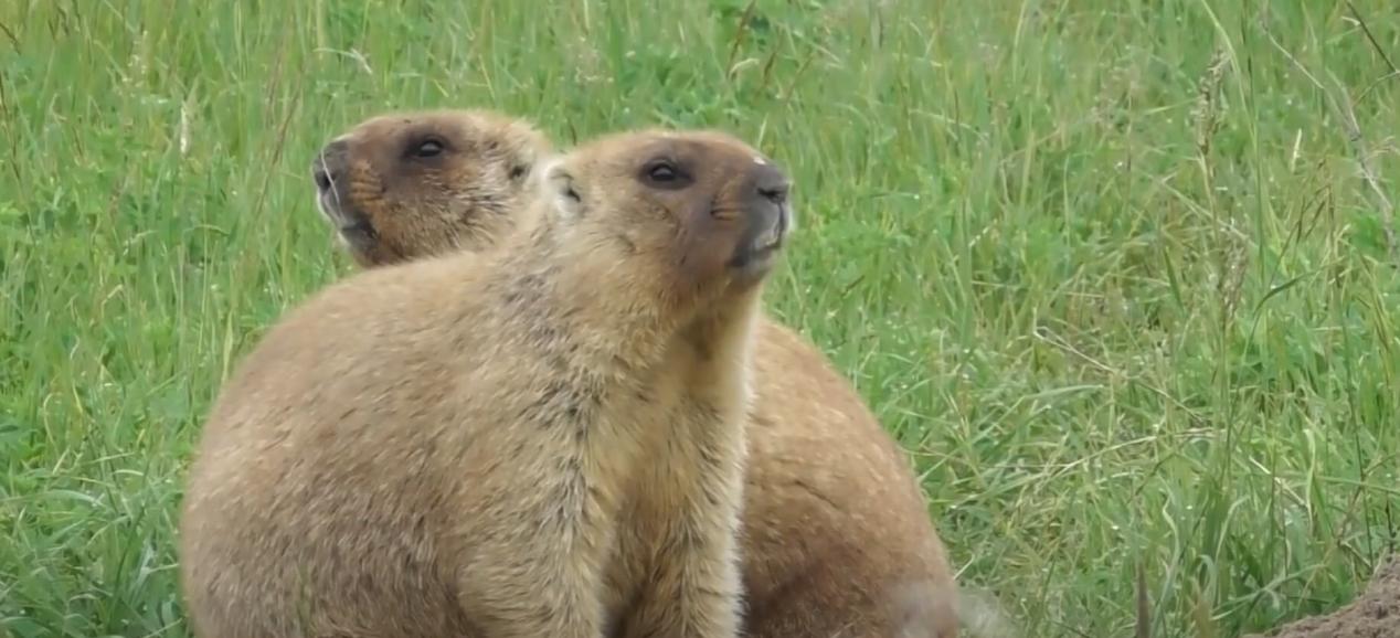 Бабаки, їжаки та горобці: синоптики з царства тварин відзначають професійне свято (відео)