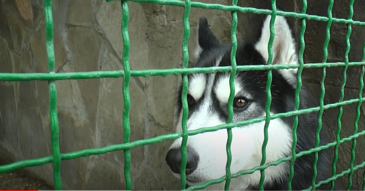 У Харкові комунальний притулок просить допомогти теплими речами для тварин (відео)