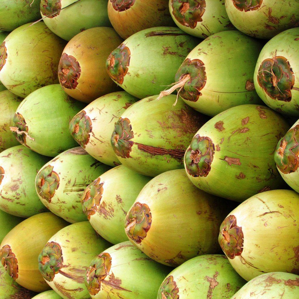 Индонезийские студенты смогут оплачивать свою учебу кокосами