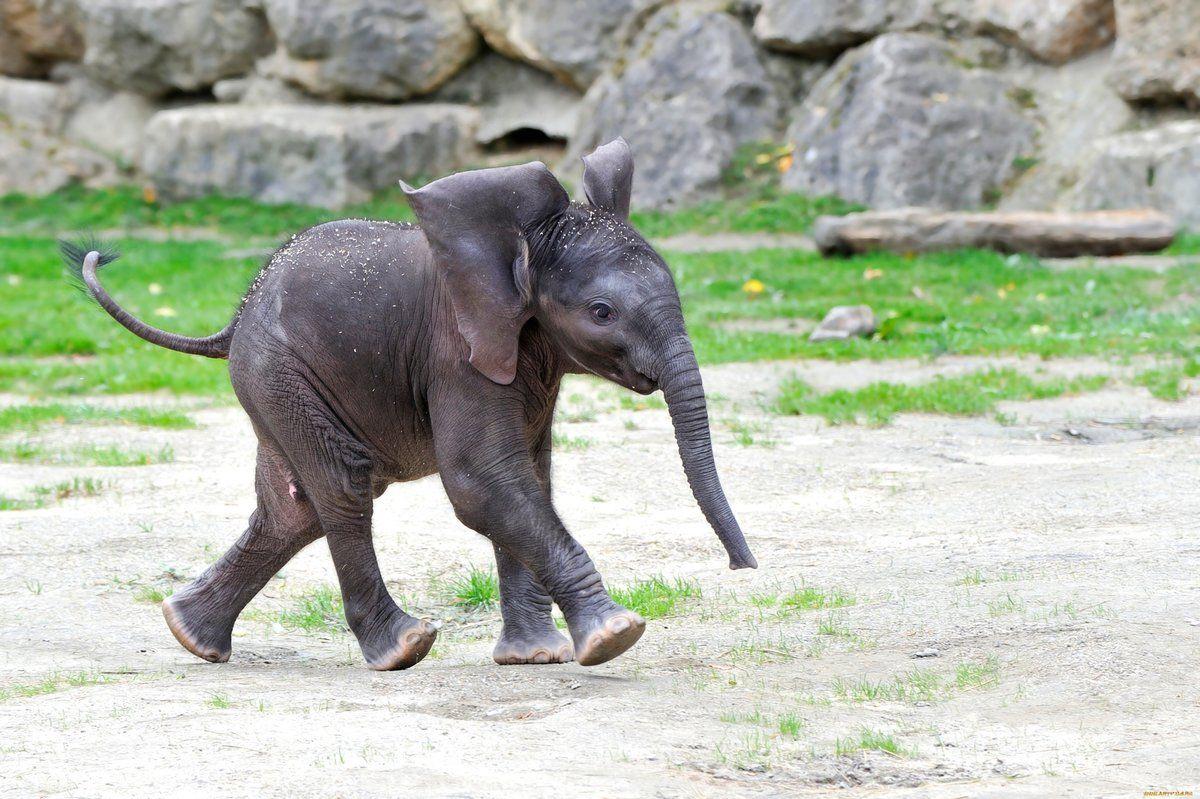 Тайский спасатель вернул к жизни маленького слоненка после ДТП (видео)