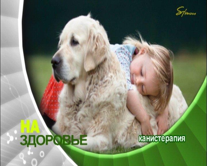 Собака – друг, терапевт, член семьи