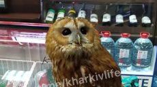 В харьковском супермаркете поселилась сова (видео)