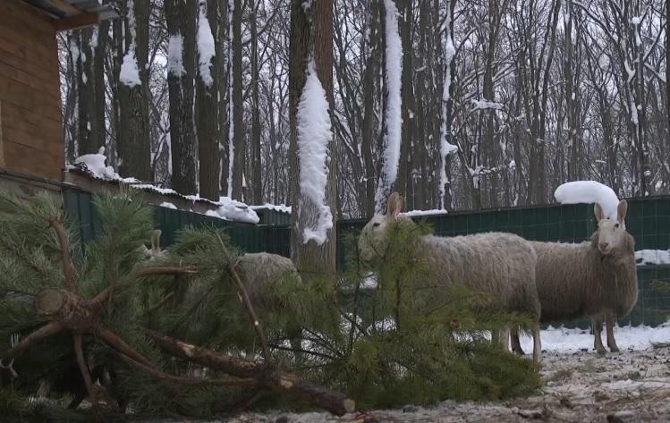 Харків'яни можуть приєднатися до екоакції та передати ялинки тваринам