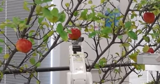 Японцы создали робота-фермера, который справляется с урожаем фруктов лучше человека (видео)